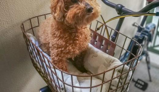 犬(小型犬)を自転車に乗せる方法